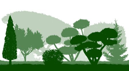 Silhouettes of beautiful ornamental trees in the Botanical garden. Vector illustration.