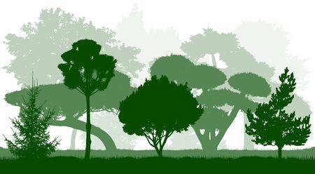Botanical garden. Ornamental trees silhouettes. Vector illustration. 向量圖像