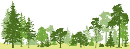Tree forest vector. Isolated set trees evergreen pine