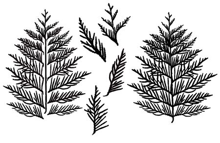 Silhouette of branch thuja, set. Ornamental tree. Separate elements. Vector illustration. Ilustrace