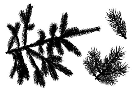 Branches of fir trees. Set of silhouettes. Vector illustration.