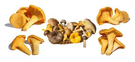 Set of mushrooms: chanterelle, boletus. Basket of mushrooms. Isolated on white background.