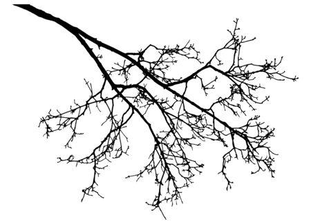 Bare branch of rowan tree silhouette. Vector illustration.