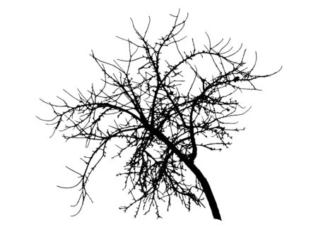 Bare branch apple tree silhouette, vector illustration.