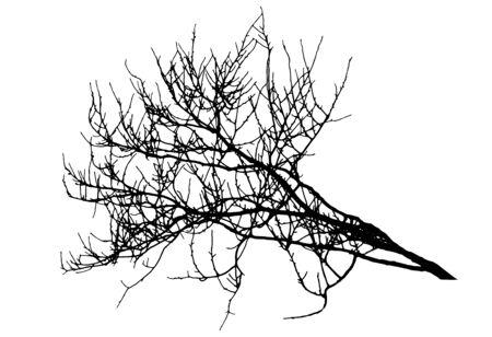 Big branch tree silhouette in winter. Vector illustration Ilustração
