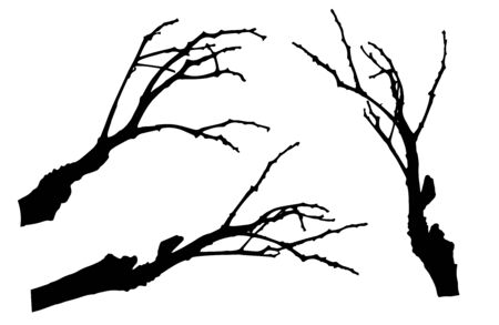 Bare branches of rowan tree silhouette. Vector illustration