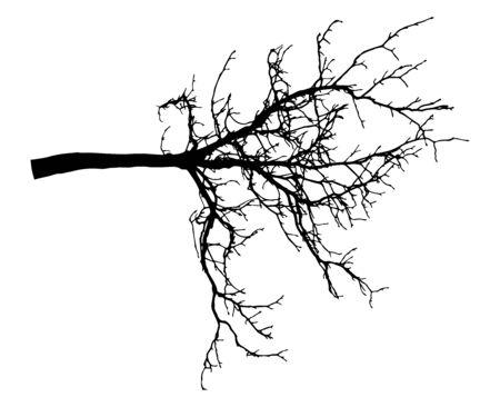 Silhouette d'arbre de branche de châtaignier. Branche nue. Illustration vectorielle Vecteurs