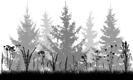 Grass with wild weeds on background of fir trees, silhouettes. Vector illustration.
