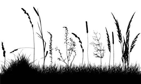 Wild weeds on grass, silhouette of meadow. Vector illustration.