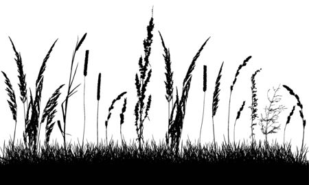 Silhouette of grassland, beautiful grass and weeds. Vector illustration.