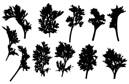 Set of branches of wormwood, silhouette. Vector illustration