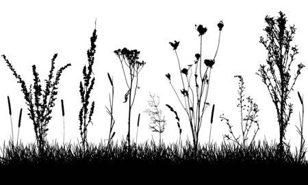 Grassland silhouette. Wild weeds on grass in field. Vector illustration. 向量圖像