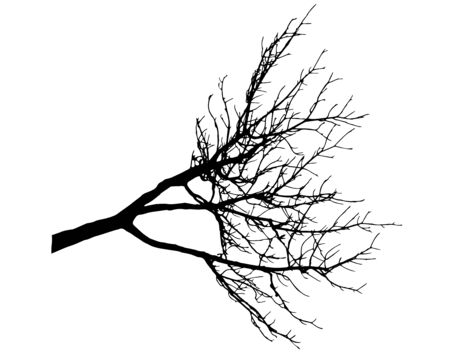 Bare branch of tree, silhouette of branch without leaves. Vector illustration.