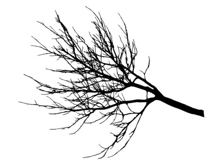Autumn branch tree without leaves, silhouette. Vector illustration. 向量圖像