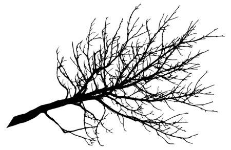 Beautiful big bare branch of tree, silhouette. Vector illustration.