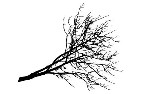Silhouette of bare branch of chestnut tree. Vector illustration