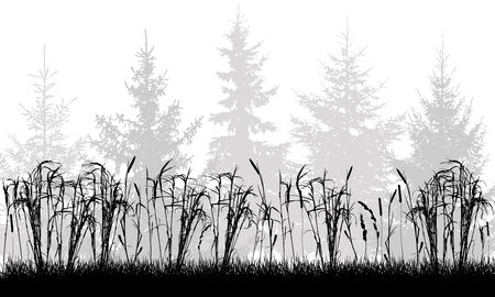 Silhouette of grassland on background of fir trees. Vector illustration.