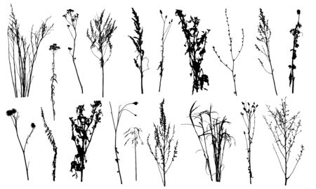 Set of silhouettes different plants and weeds. Vector illustration.