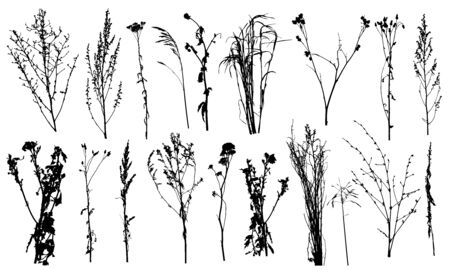 Weeds and different plants, set of silhouettes. Vector illustration.