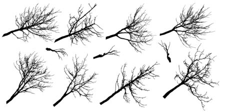 Big set of silhouettes of autumn branches of different trees. Vector illustration. 일러스트