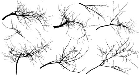 Bare branches different trees (apple tree, chestnut, cherry tree, poplar and etc.), set. Vector illustration.
