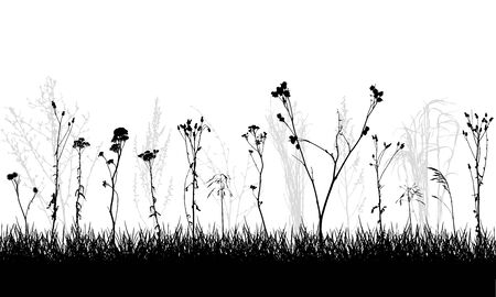 Silhouette wild plants and weeds, meadow. Vector illustration.