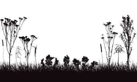 Meadow, composition of wild weeds and plants, and grass, silhouette. Vector illustration.