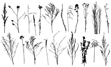 Collection of wild plants and weeds, silhouettes. Vector illustration. Reklamní fotografie - 140634052