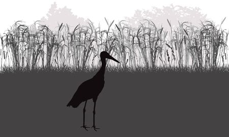 Stork bird stands in meadow among grass and weeds, plants, silhouette. Vector illustration. Ilustração