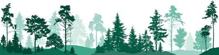 Fir trees forest. Isolated on white background. Vector illustration