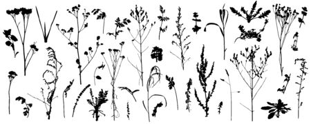 Plants, wild weeds, big set of silhouettes. Vector illustration.