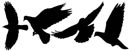 Flying birds (pigeon, crows) silhouettes, vector illustration.