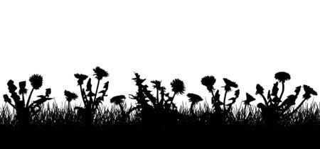 Dandelion flowers in grass, silhouette of field (meadow). Vector illustration