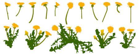 Colorful icon of dandelion flower, set. Vector illustration.