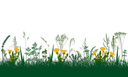 Meadow in spring, colorful plants and weeds and flowers. Vector illustration