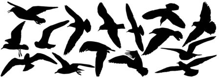 Silhouettes of seagull birds, set. Vector illustration