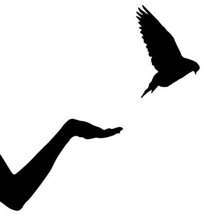 Dove bird flew up from female hand, isolated silhouette. Vector illustration Ilustracja