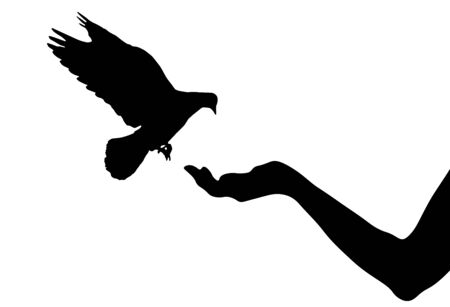 Pigeon bird flies on woman's hand that has food for birds, silhouettes. Vector illustration Ilustracja