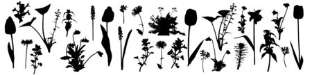 Silhouettes of different flowers, weeds and other plants, set. Vector illustration