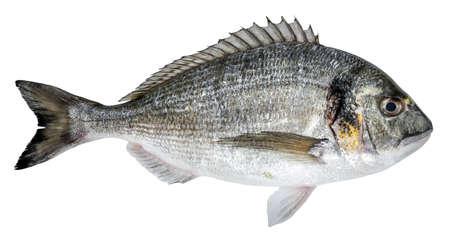Fresh fish dorado isolated on white background