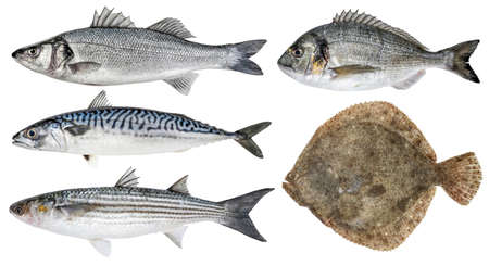Fresh sea fish. Isolated set on a white background. Sea bass, dorado, mackerel, mullet, turbot Banque d'images