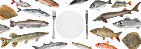 School of various fish float right into the plate. Fish isolated collection. Shop fish restaurant Banque d'images