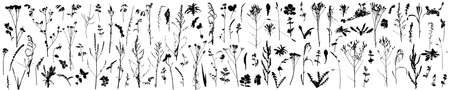 Big set of different plants, flowers, weeds. Silhouettes of autumn plants. Vector illustration.