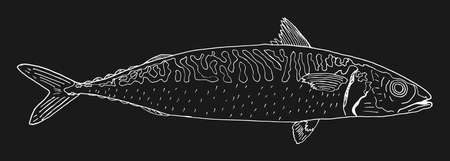 Mackerel fish hand drawn. Contour of mackerel on black background. Seafood design element. Vector illustration.  イラスト・ベクター素材