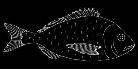 Dorado fish hand drawn. White contour of dorado on black background. Vector illustration.  イラスト・ベクター素材