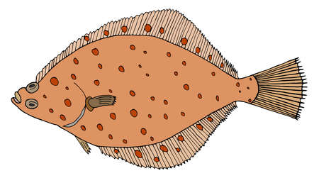 Color flounder fish, hand drawn. Colorful flatfish isolated on white background. Vector illustration. Illustration