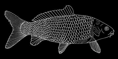 Fish carp with scales hand drawn. White contour of fish on black background. Vector illustration.