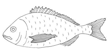 Fish dorado hand drawn. Black and white. Beautiful fish drawing on white background. Vector illustration Illustration