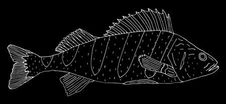 Perch fish hand drawn. White contour of fish on black background. Vector illustration.