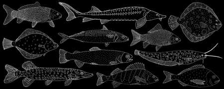 Set of sea and river fish hand drawn. White contour of different fish on black background, collection. Vector illustration. Ilustração